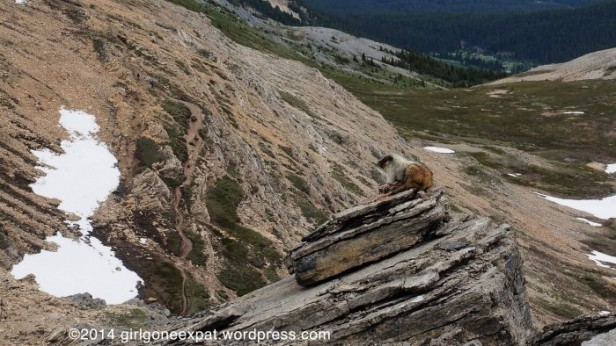 Marmot on mountain