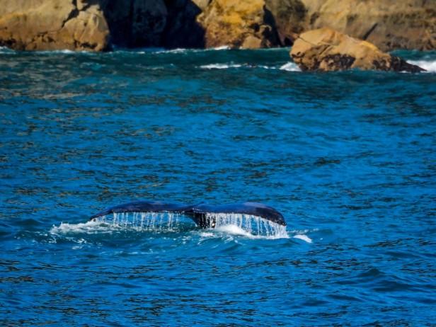 Whale Seward Alaska