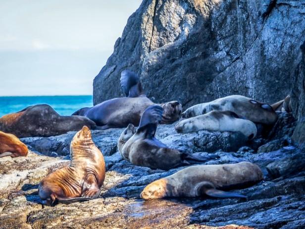 Sea lions Seward Alaska