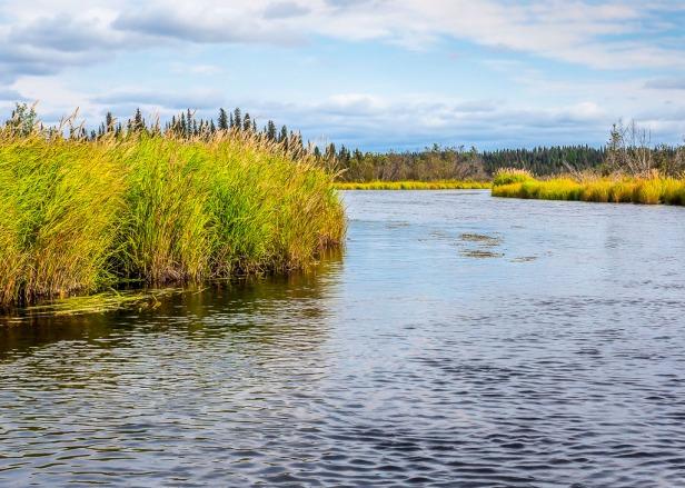 Canoeing Swanson River Kenai Peninsula