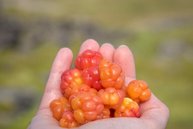 multebær i hånd finnmark