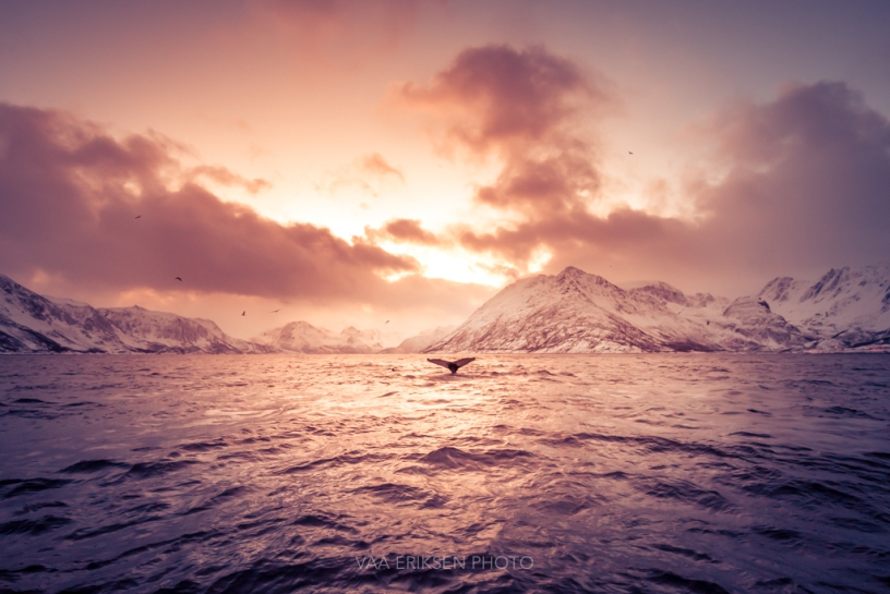 Øksfjord Alta Finnmark Norway