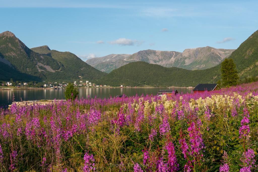 Medby Sifjord